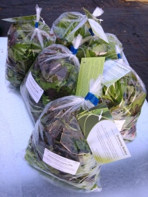 Salad bags for retail 160720 comp