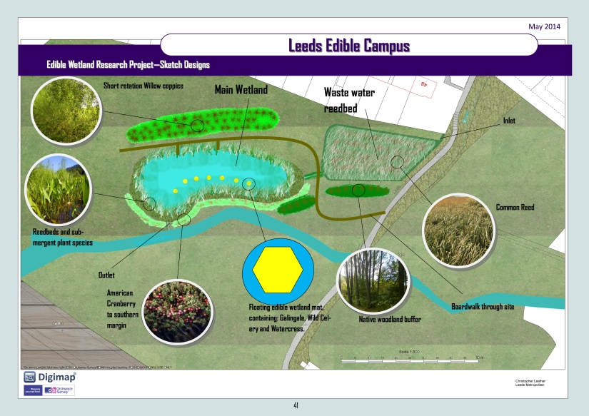 Edible Wetland Research Project